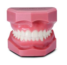 Ортодонтичний прикус